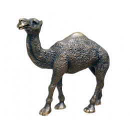 Camel, Large