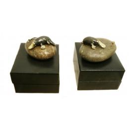 Small Platypus On Stone